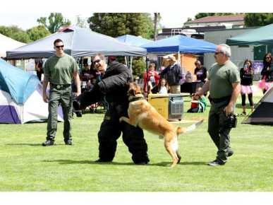 Getting attacked by a Police Dog