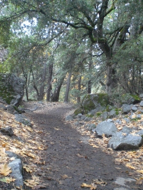 The Trail is awesome